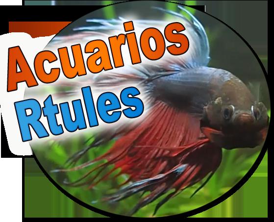 AcuariosRtules