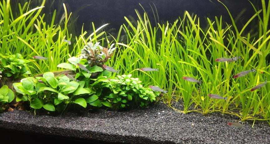 acuario plantado low tech