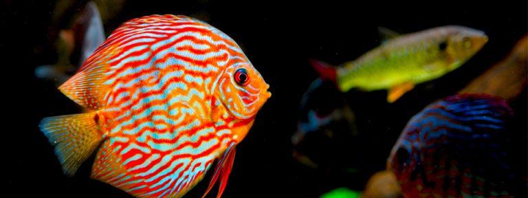 ¿Por qué se mueren mis peces? 10 errores que todo el mundo comete