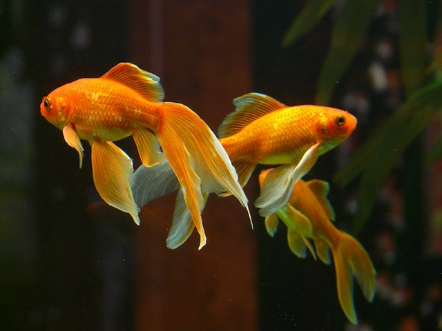 ¿Por qué se mueren mis peces?