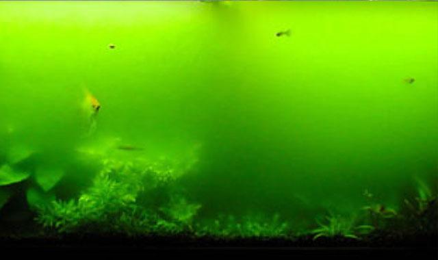 acuario agua verde