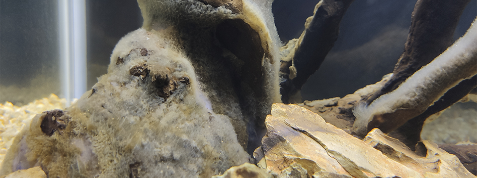 moho en el tronco del acuario