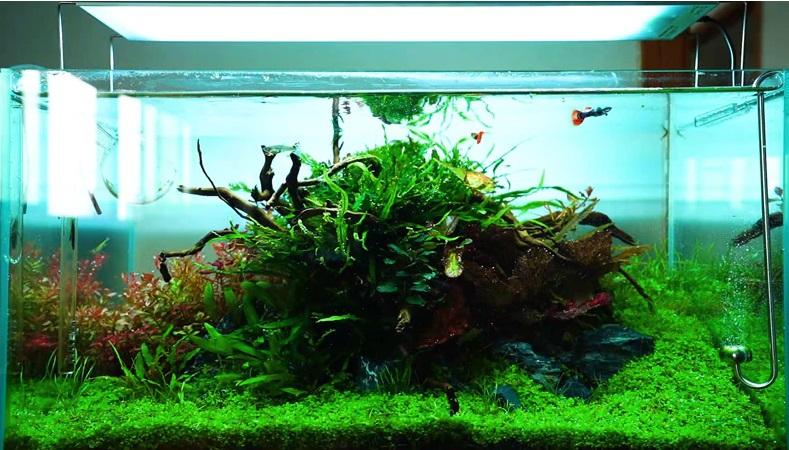 mejor pantalla para acuario plantado