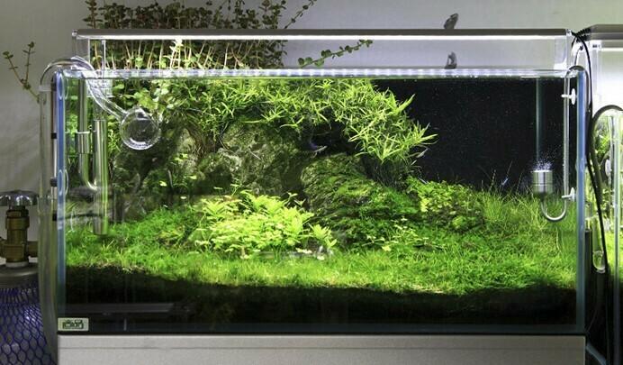 Acuario con iluminación Chihiros LED