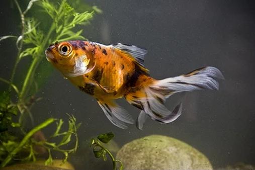 comida para peces de agua fria
