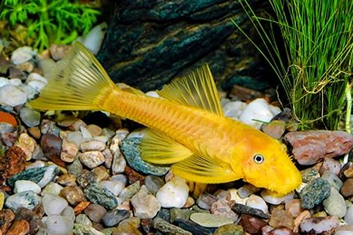 comida para peces de fondo